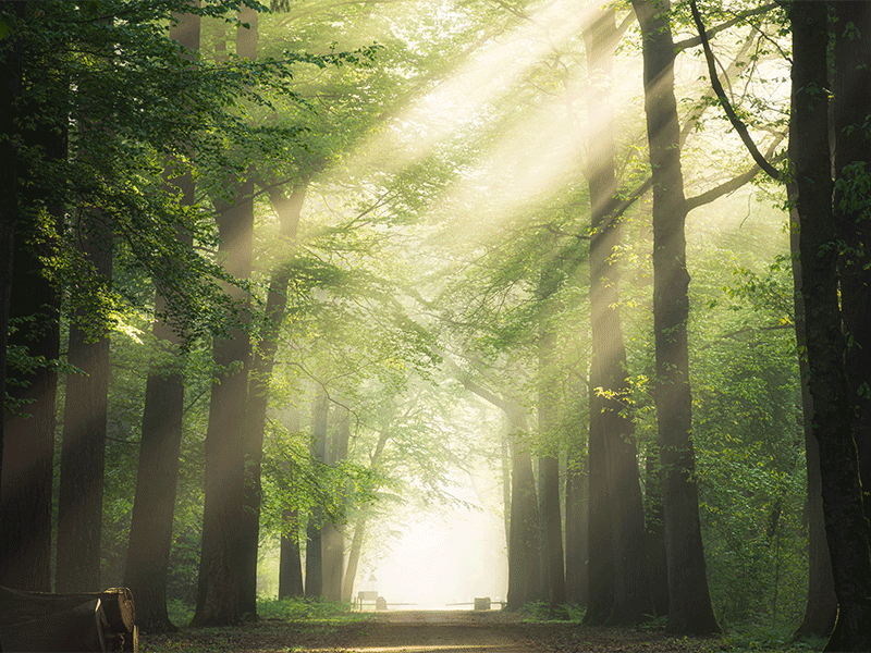 Pictured is a forest path and the sun passing through the leaves.